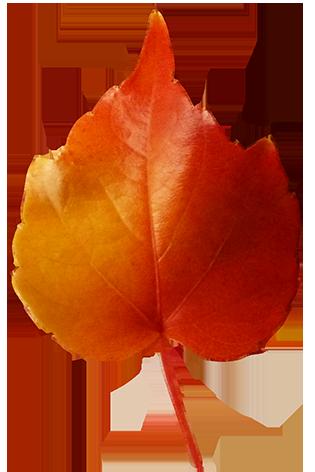 Fall Leaves Clip Art Beautiful Autumn Clipart Graphics #06jy7u.