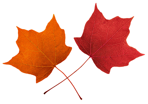 Fall leaves clip art beautiful autumn clipart 3.