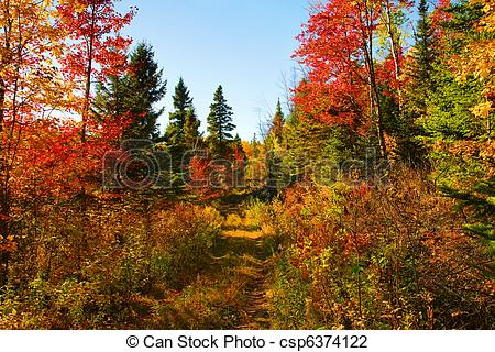 Stock Photo of Beautiful autumn day in the woods.