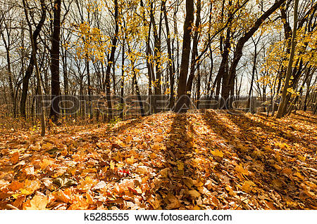 Stock Image of Beautiful autumn day in the forest k5285555.
