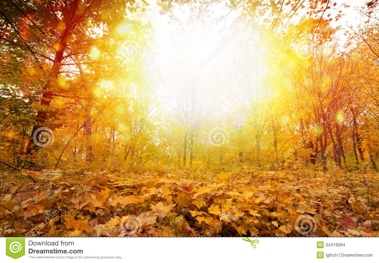 Fall Stock Photos, Images, & Pictures.