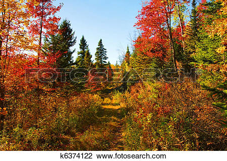 Stock Photo of Beautiful autumn day in the woods k6374122.