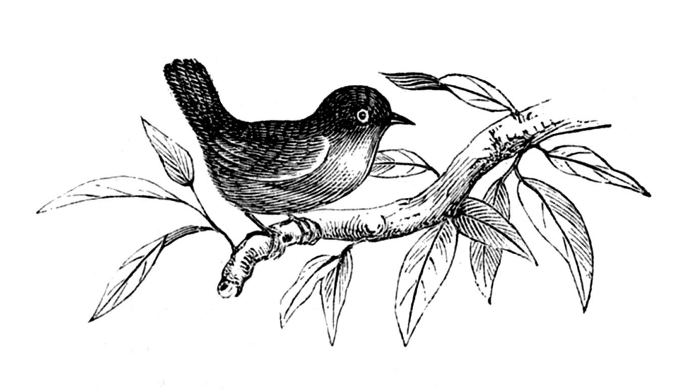 Beautiful Nature Clipart Black And White.