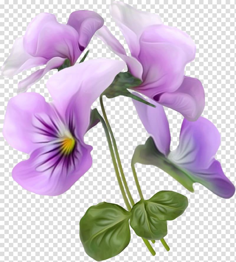 Viola tricolor Flower , Beautiful bouquet transparent.