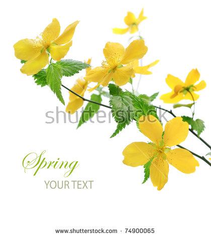 Yellow Flower Stock Photos, Royalty.