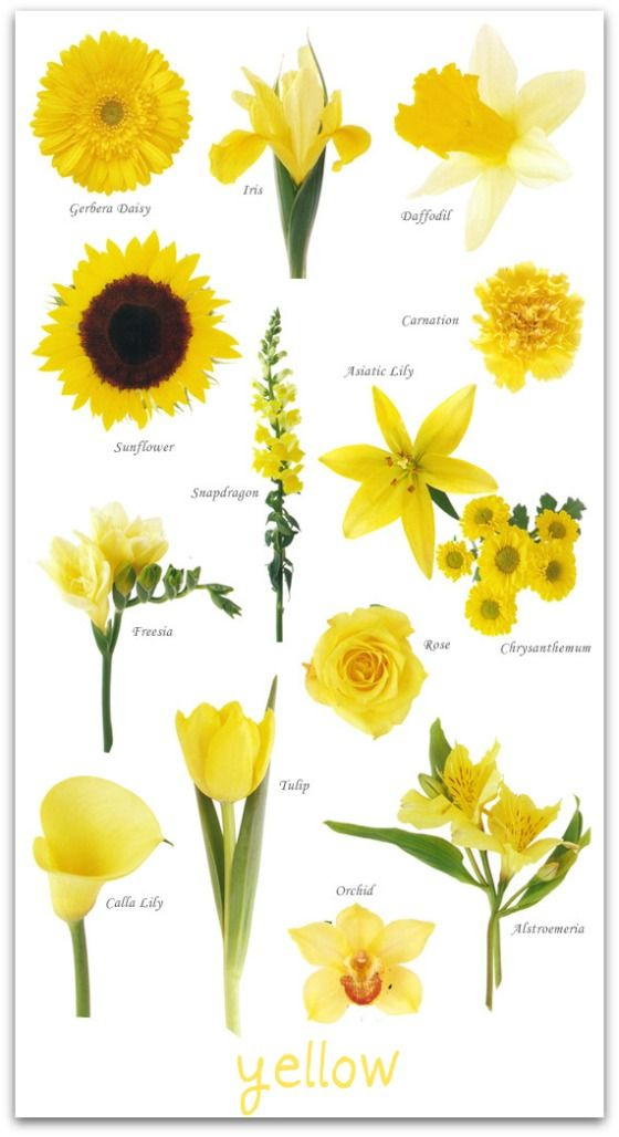 Yellow Flowers Names And Pictures Source 1000 Ideas About On