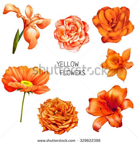 Set Of Beautiful Yellow, Orange Flowers: Bright Rose, Camellia.