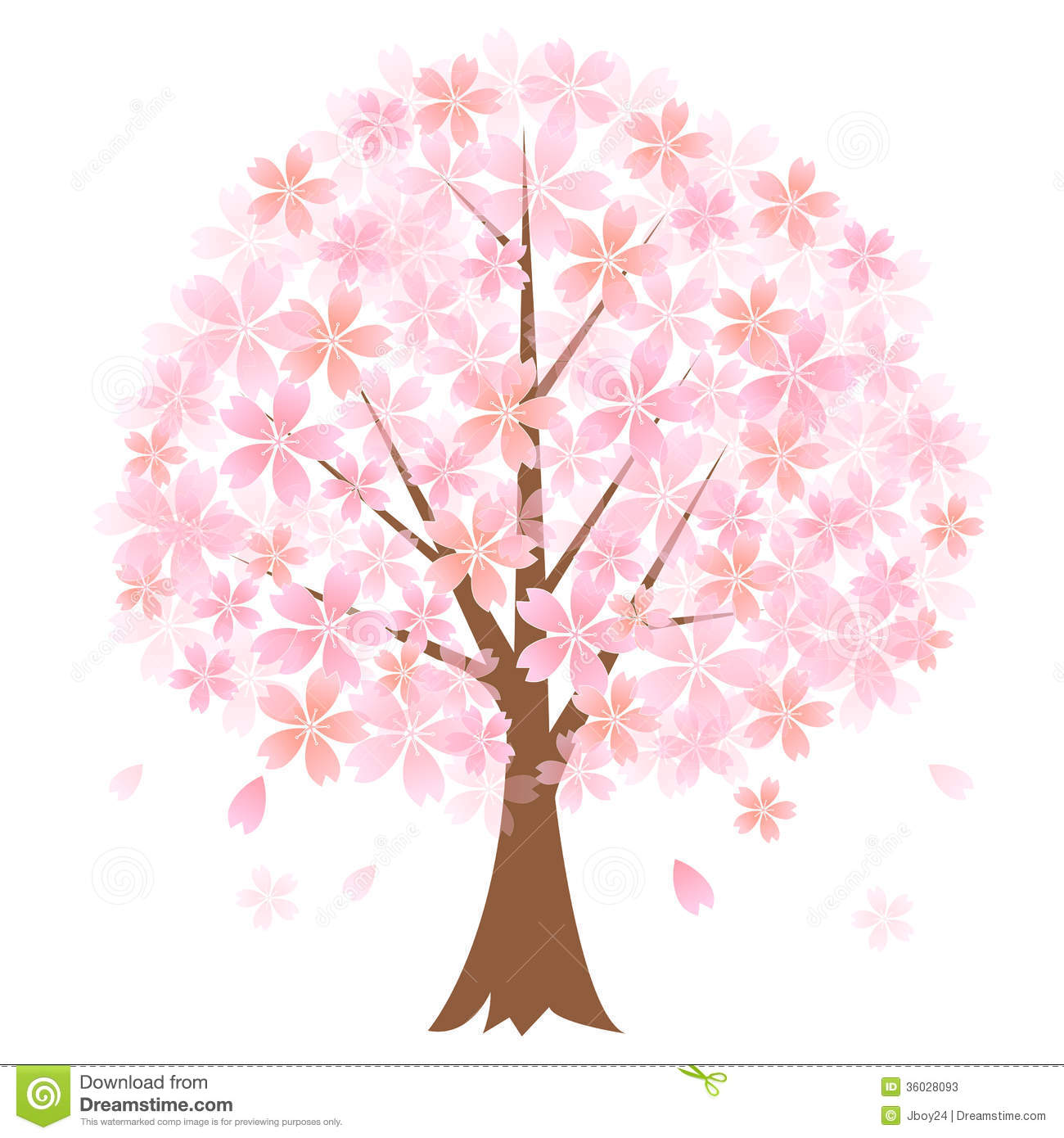 Cherry Tree Stock Photos.