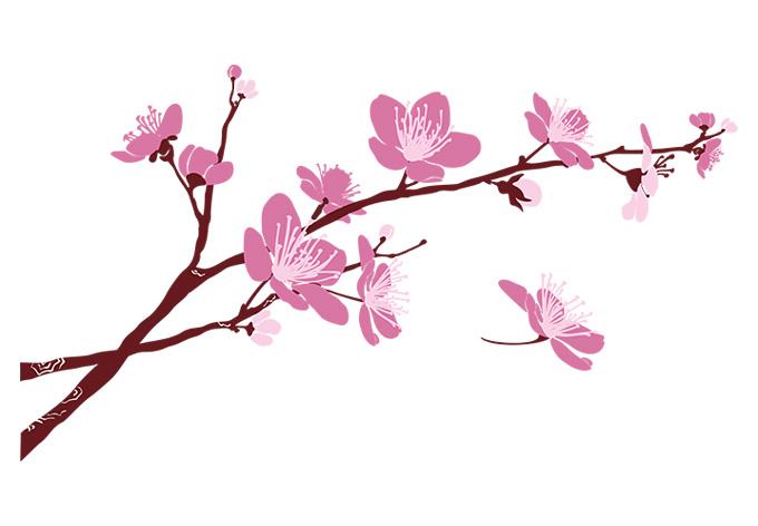 Cherry Blossom Clipart.