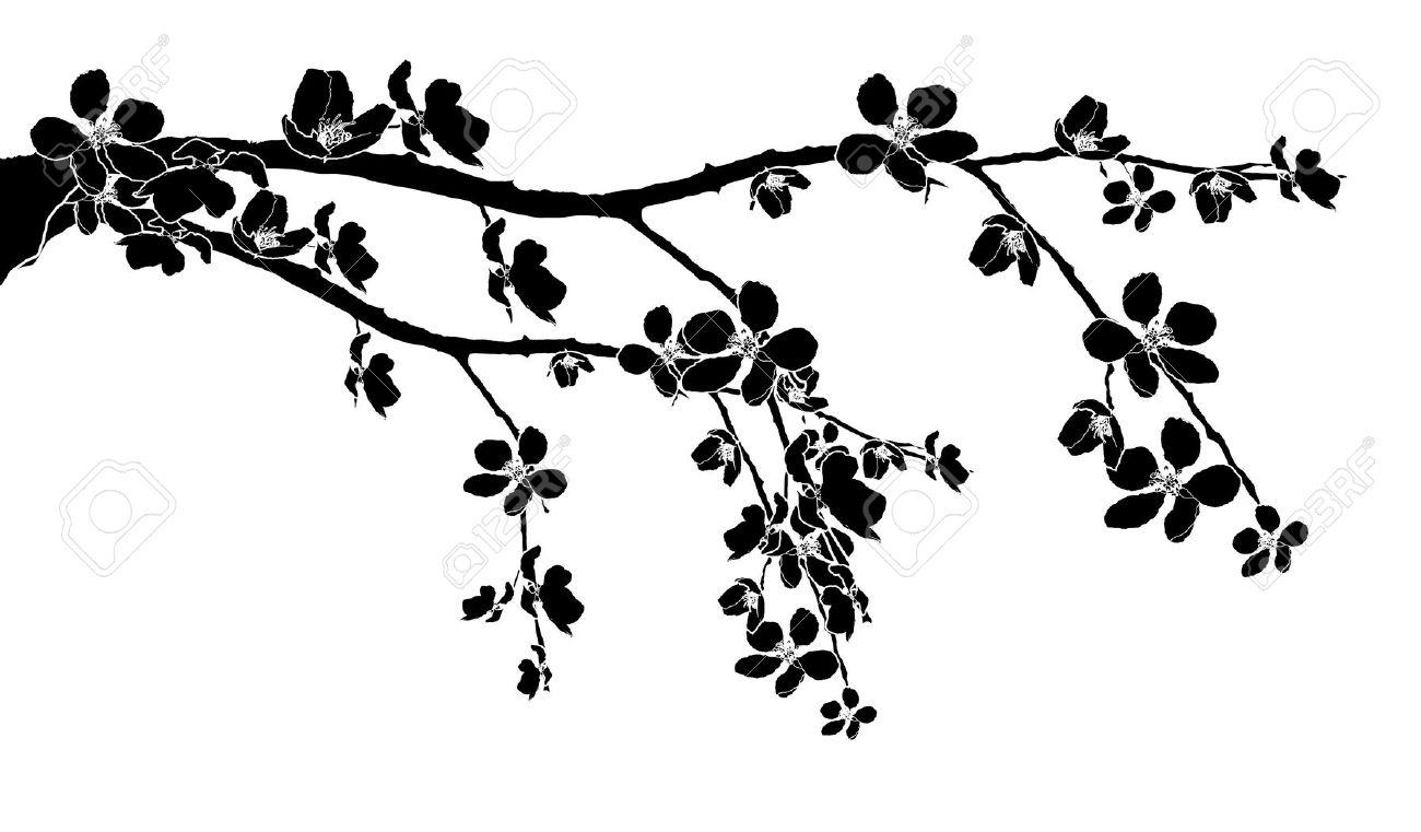 Black Branch Of Beautiful Seasonal Cherry Blossom Royalty Free.