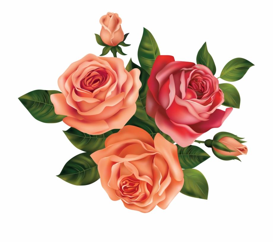 Drawing Rose Beautiful Flower.