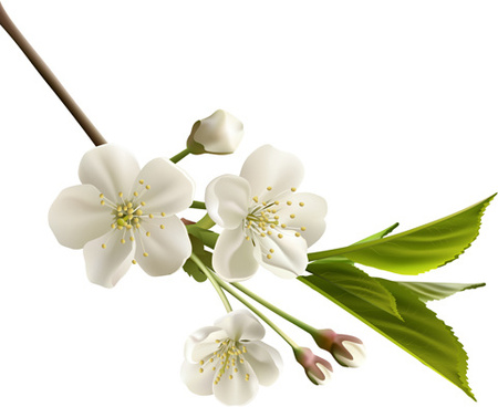 Beautiful garden flowers clipart free vector download (21,403 Free.
