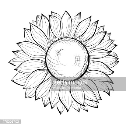beautiful black and white sunflower isolated on white.