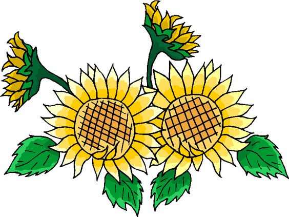 Beautiful Sunflowers Clipart Images http://clipart.