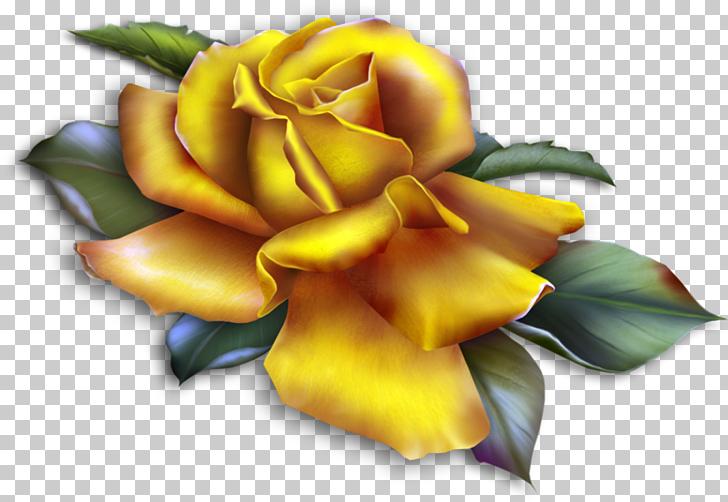 Rose Yellow , Beautiful Yellow Rose , yellow rose graphics.