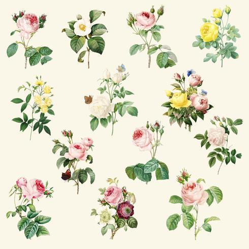Set of beautiful blooming roses.