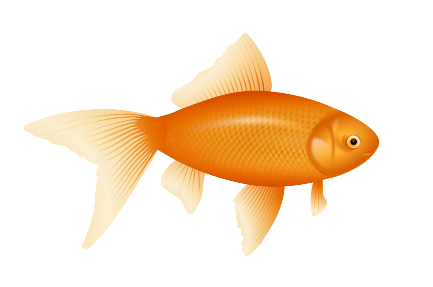 Beautiful fishes hd clipart.