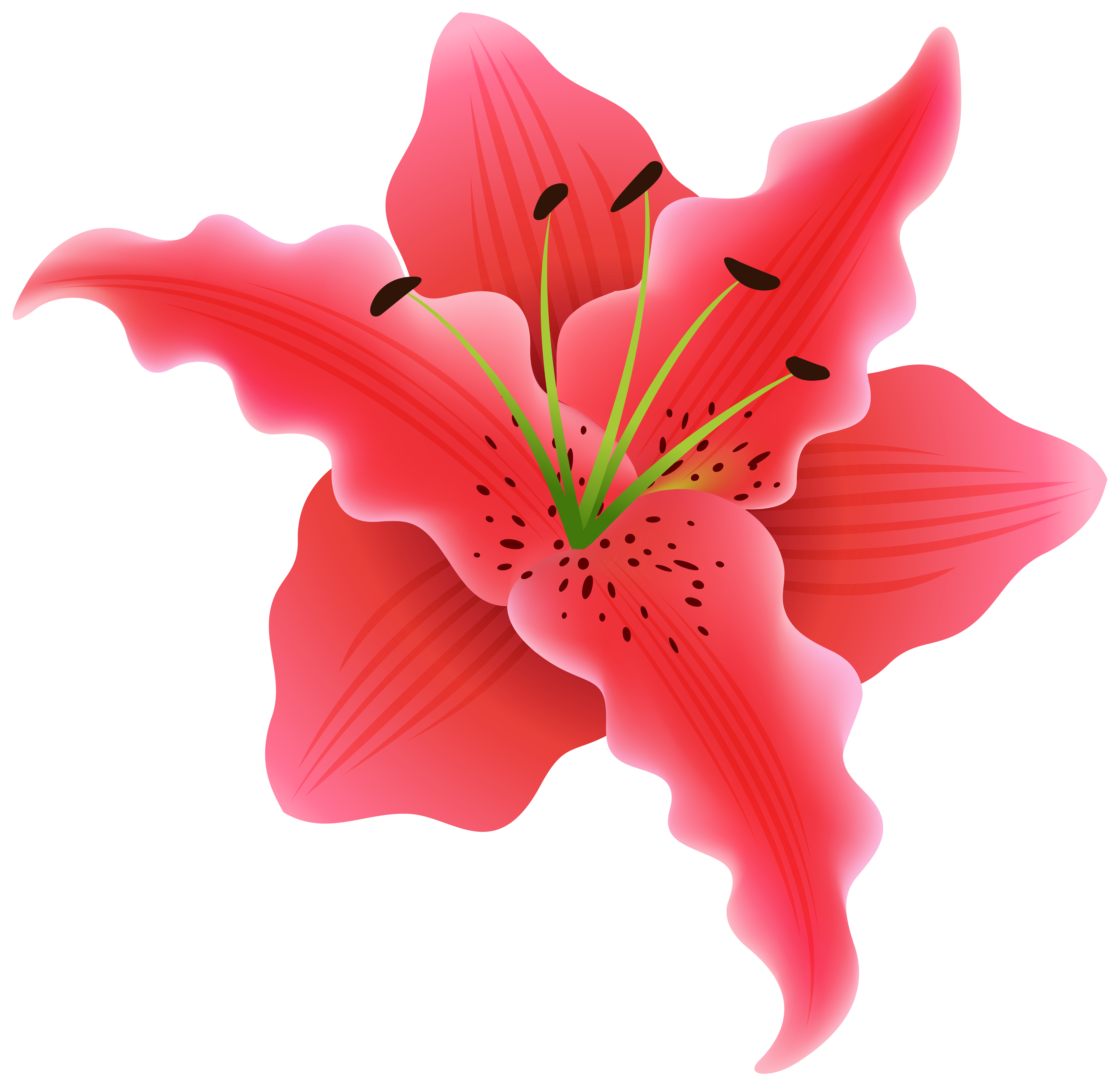 Beautiful Exotic Flower PNG Clipart Image.