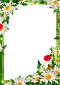 Set frames in PNG format with beautiful flowers.