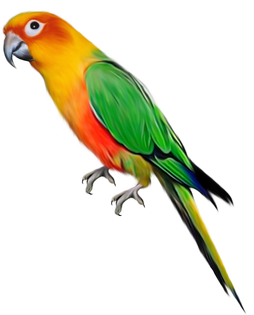 Parrot PNG images, free pictures download.