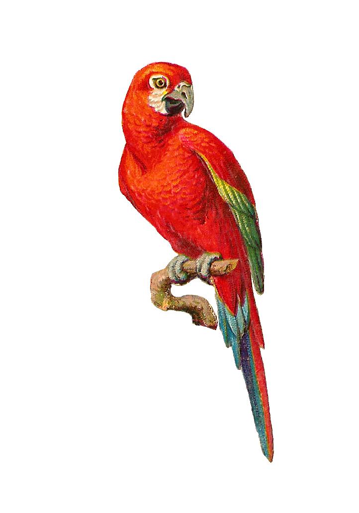 Bird Graphic.