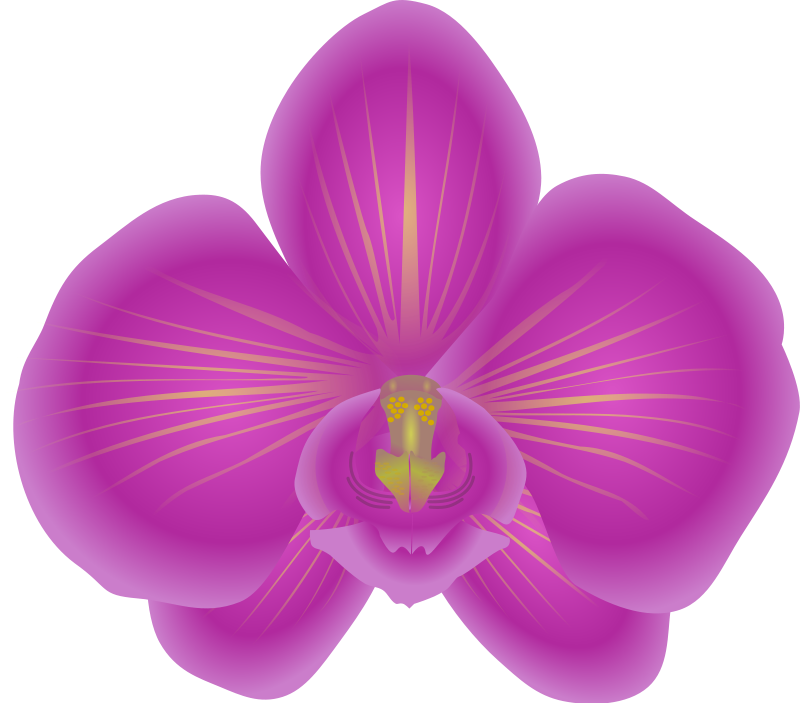 Free to Use & Public Domain Orchid Flower Clip Art.