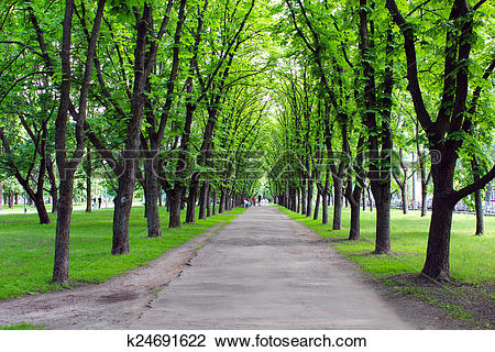 Stock Photo of Beautiful park with many green trees k24691622.