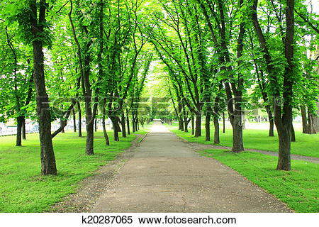 Stock Image of Beautiful park with many green trees k20287065.