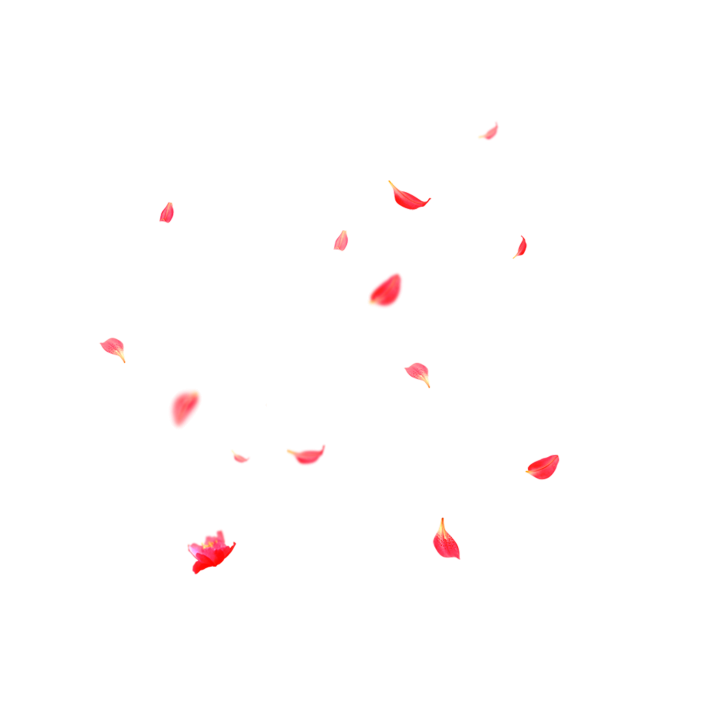 Beautiful Flower Petals Falling PNG.