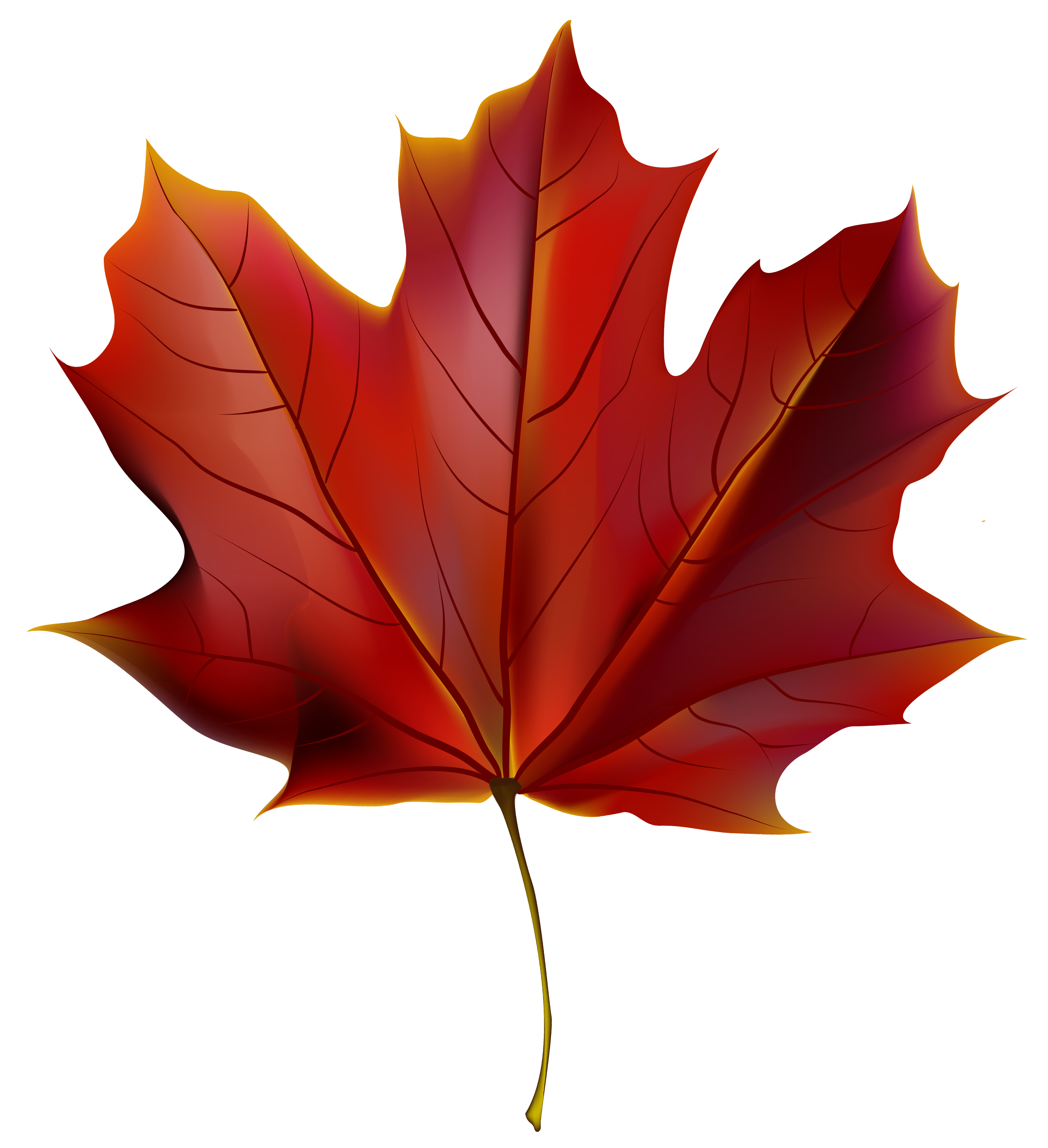 Beautiful Red Autumn Leaf PNG Clipart Image.