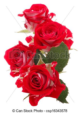 Beautiful red rose flowers clipart.