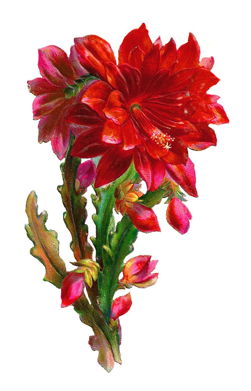 Beautiful flower clip art.