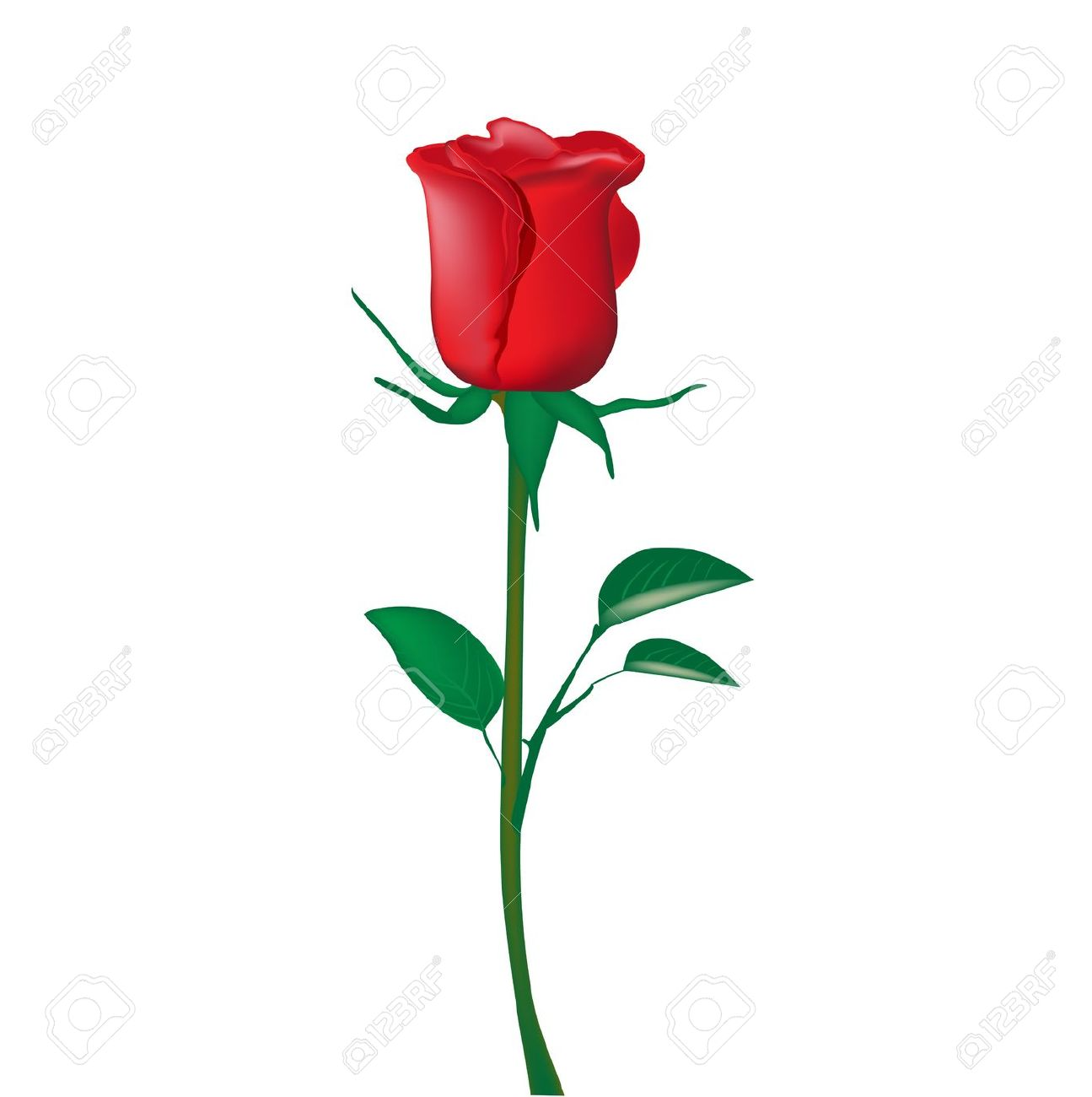 Beautiful red rose clipart download.