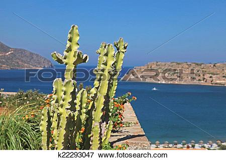 Picture of Beautiful sea view and terrace with cactus and flowers.