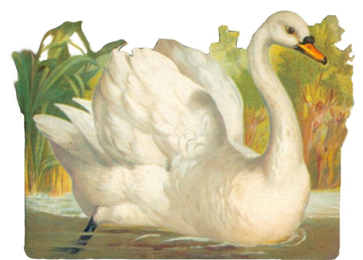 Vintage swan clipart by *jinifur on deviantART.