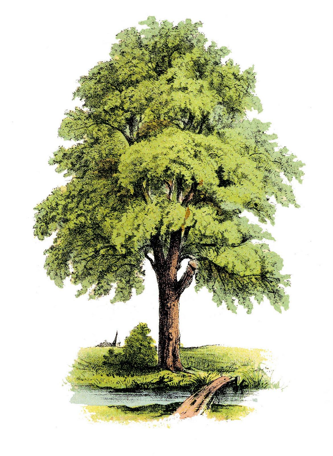 Clipart of pretty tree.