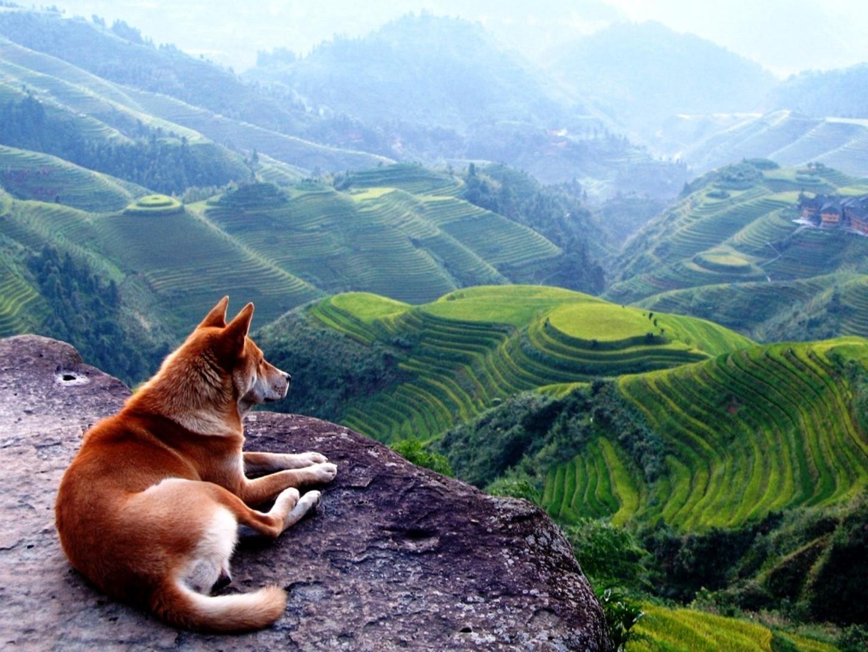 Beautiful landscape clipart for desktop.