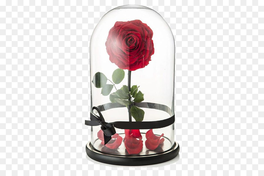 Beauty And The Beast Rose png download.
