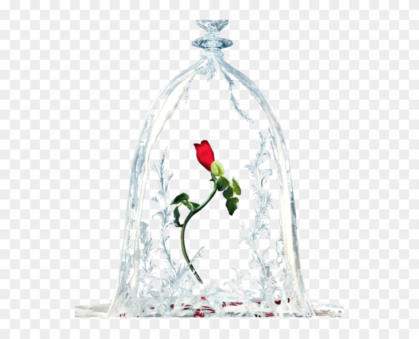 Beauty And The Beast Rose Transparent, HD Png Download.