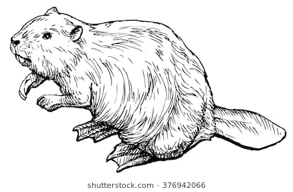 Beaver clipart black and white 7 » Clipart Station.