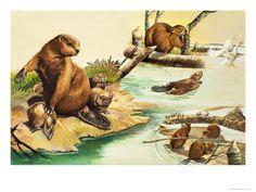 79 Best Beavers images.