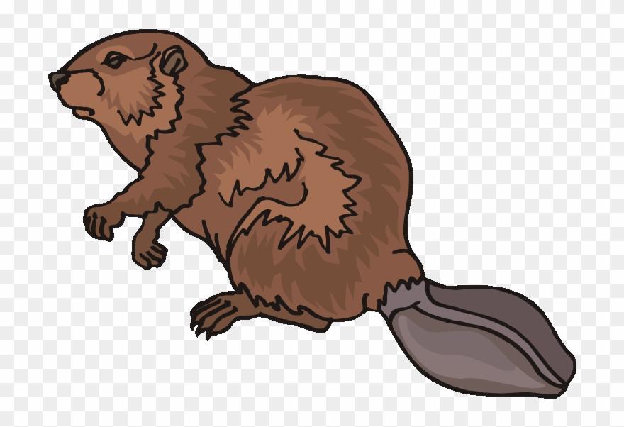 Top 80 Beaver Clip Art.