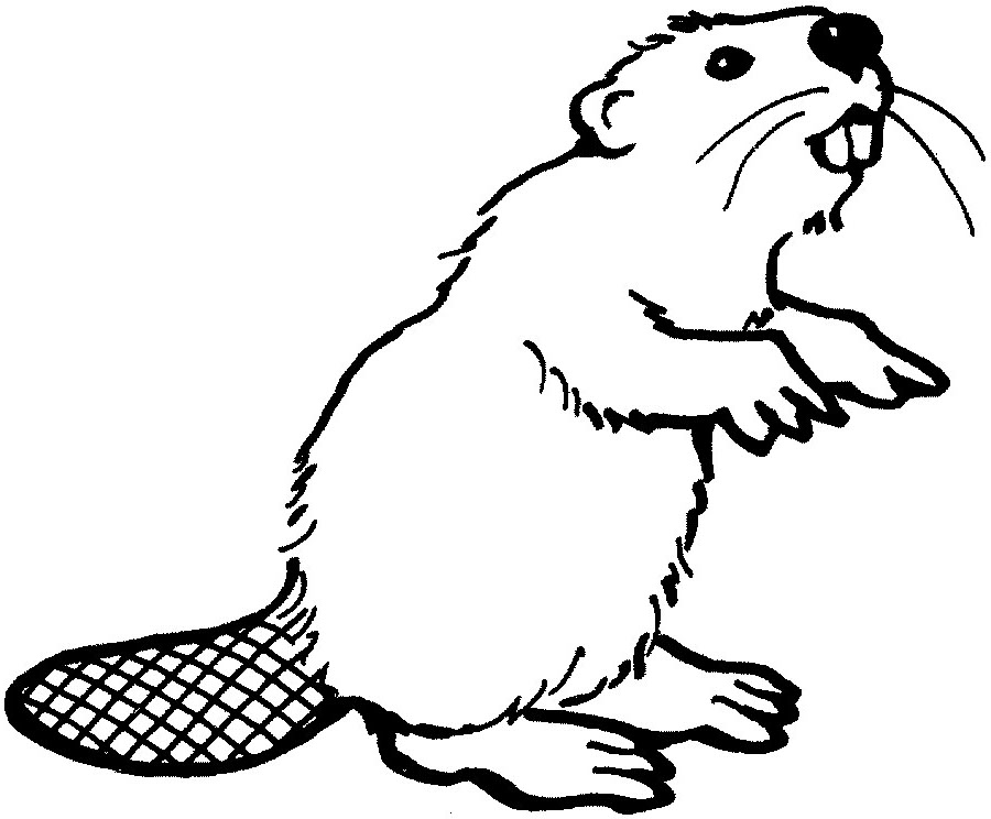 Beaver Clipart Outline Clipground