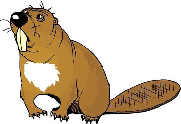 Beaver Clipart & Beaver Clip Art Images.