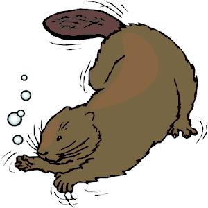 Beaver Clip Art & Beaver Clip Art Clip Art Images.
