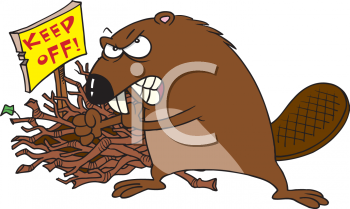 Clipart Picture of a Beaver Guarding His Dam.