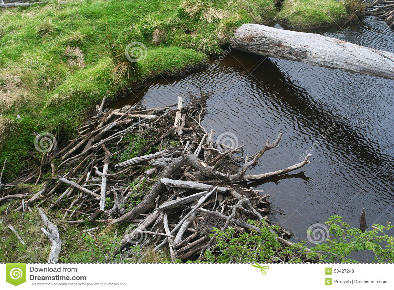 The Beaver Dam Stock Photo.