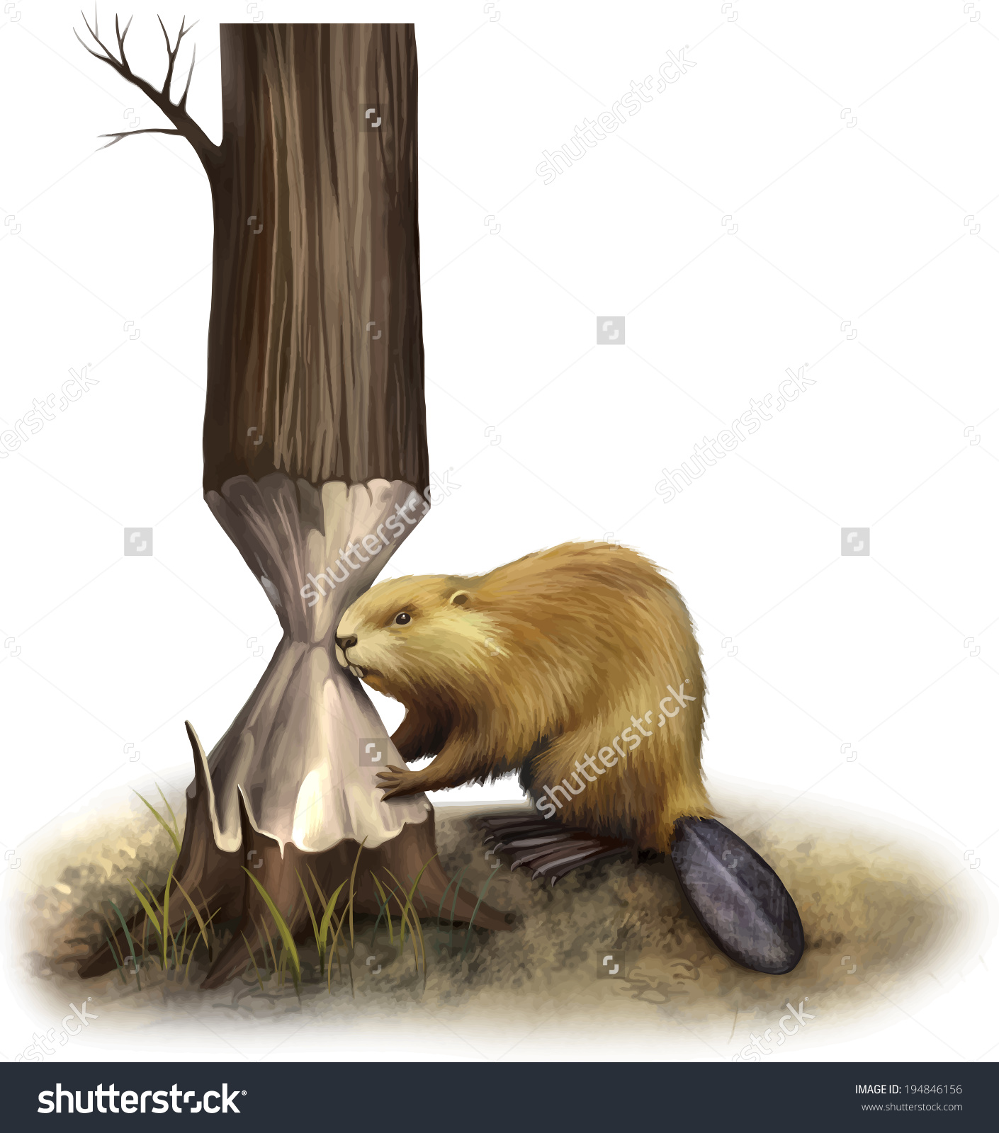 Beaver Eating Tree Gnawing Illustration Isolated Stock Vector.