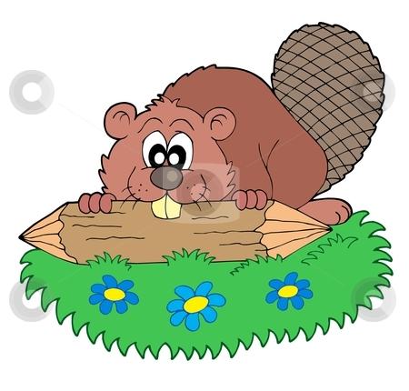 Beaver cliparts.