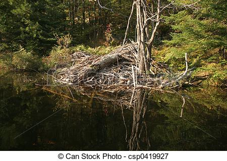 Picture of Beaver lodge in Canada csp0419927.